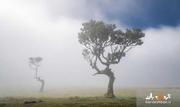 درختان 500 ساله در جنگل جزیره مادیرا