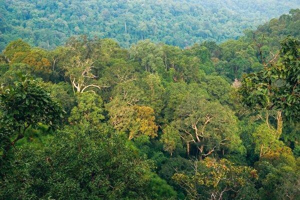 پهپادی که اجساد را در جنگل پیدا می نماید
