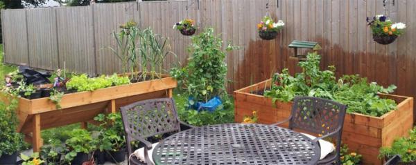 راهنمای پرورش سبزیجات ارگانیک در باغچه خانه