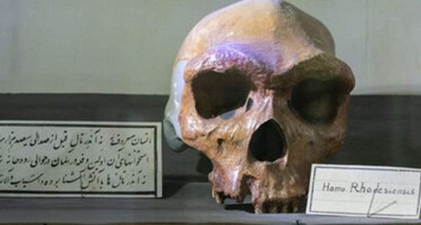 جای خالی موزه ای درباره اپیدمی ها