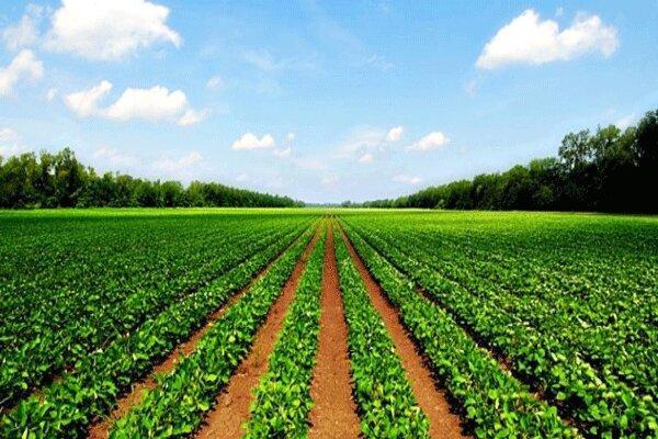 گرسنگی 840 میلیون نفر با ترکیب نانو و هوش مصنوعی در کشاورزی برطرف می گردد